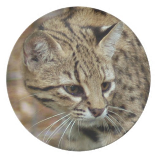 geoffroy-cat-002 party plate