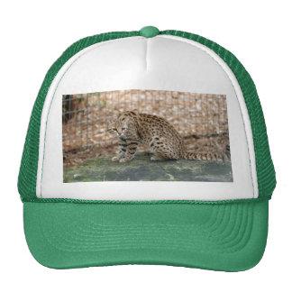 geoffroy-cat-003 trucker hat