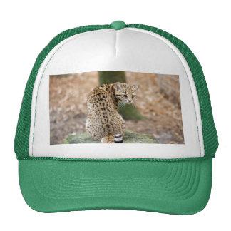 geoffroy-cat-004 trucker hat