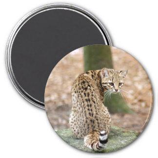 geoffroy-cat-004 imán redondo 7 cm