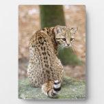geoffroy-cat-004 placa