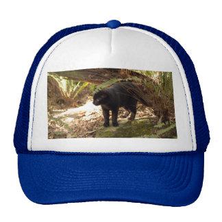 geoffroy-cat-005 mesh hats