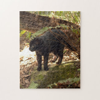 geoffroy-cat-005 puzzles