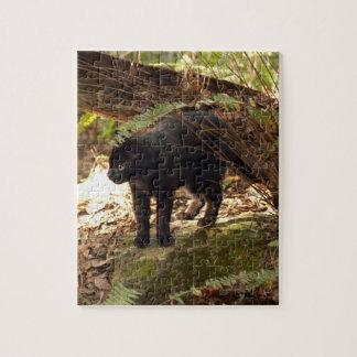 geoffroy-cat-005 rompecabezas con fotos