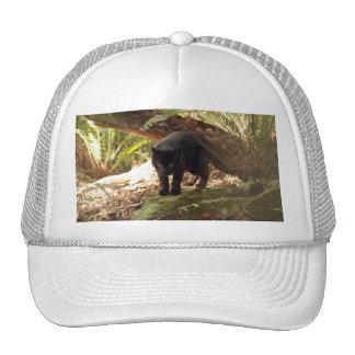 geoffroy-cat-006 trucker hats