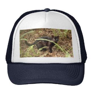 geoffroy-cat-007 mesh hat
