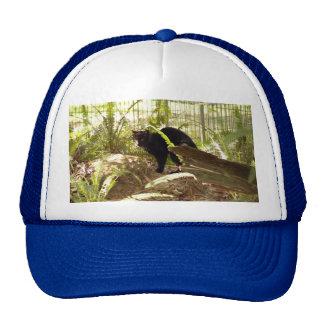 geoffroy-cat-009 mesh hats