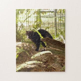 geoffroy-cat-009 puzzle con fotos