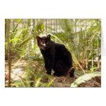 geoffroy-cat-010 greeting card