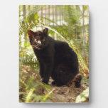 geoffroy-cat-010 placa de madera