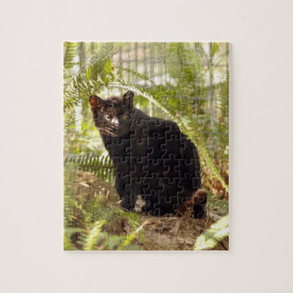 geoffroy-cat-010 puzzles