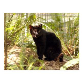 geoffroy-cat-010 postales