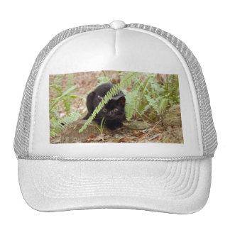 geoffroy-cat-011 mesh hats