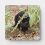 geoffroy-cat-011 placas para mostrar