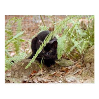 geoffroy-cat-011 postcard