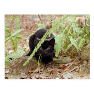geoffroy-cat-011 tarjetas postales