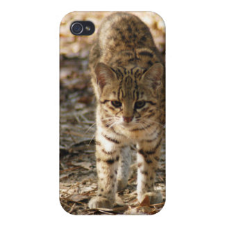geoffroy-cat-012 iPhone 4 protectores