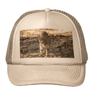 geoffroy-cat-012 hat