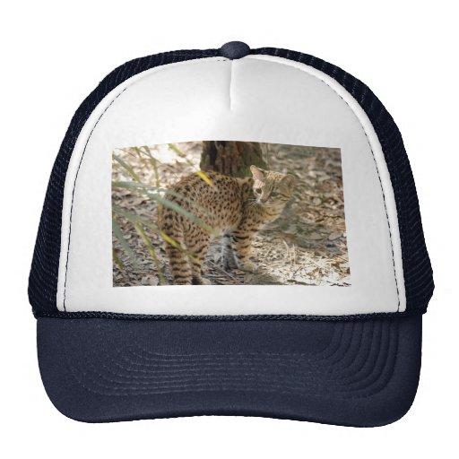 geoffroy-cat-013 gorras de camionero