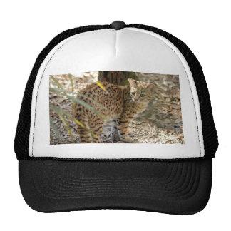 geoffroy-cat-013 mesh hats