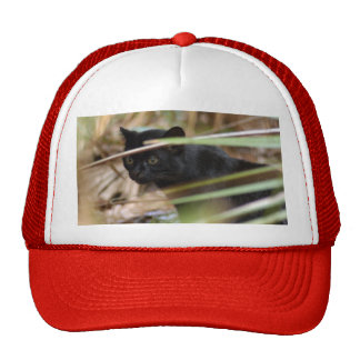 geoffroy-cat-014 hats