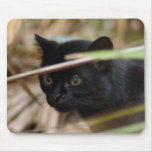 geoffroy-cat-014 mouse pad