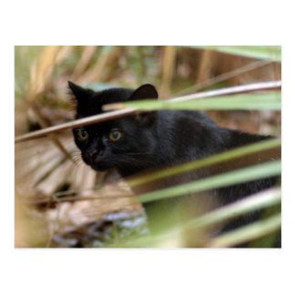 geoffroy-cat-014 tarjeta postal