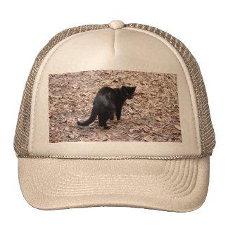 geoffroy-cat-015 hat