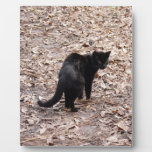 geoffroy-cat-015 placa