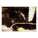 geoffroy-cat-016 greeting card