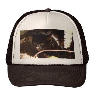 geoffroy-cat-016 hat