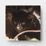 geoffroy-cat-016 placa de madera