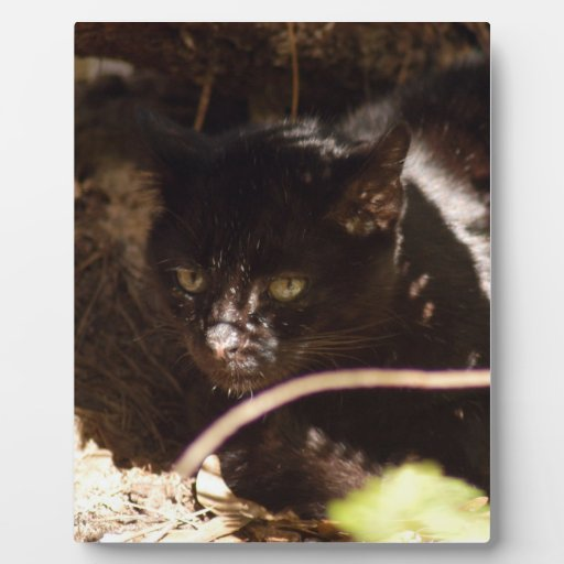 geoffroy-cat-016 placas