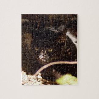geoffroy-cat-016 puzzle con fotos