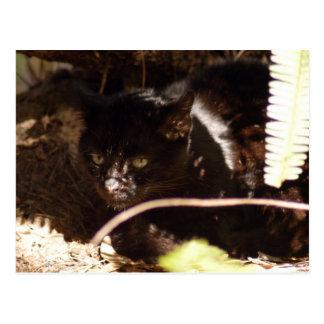 geoffroy-cat-016 tarjetas postales