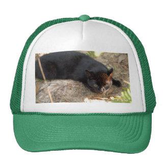 geoffroy-cat-017 trucker hats