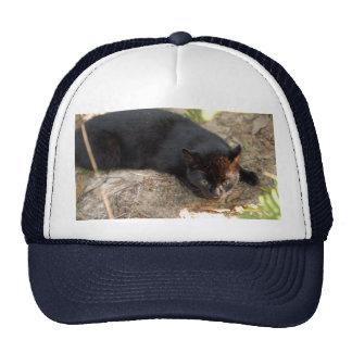 geoffroy-cat-017 hat