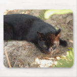 geoffroy-cat-017 mouse pad