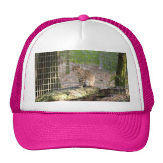 geoffroy-cat-018 hat
