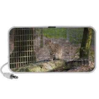 geoffroy-cat-018 laptop speakers