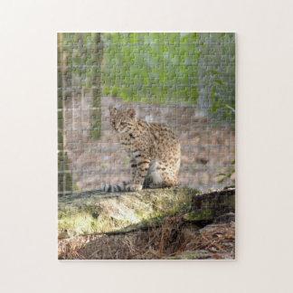 geoffroy-cat-018 puzzles con fotos