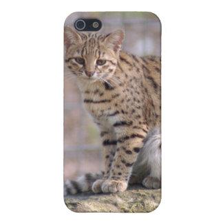geoffroy-cat-019 iPhone 5 coberturas