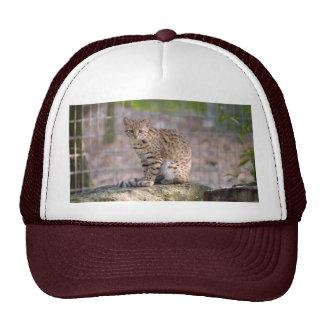 geoffroy-cat-019 hat