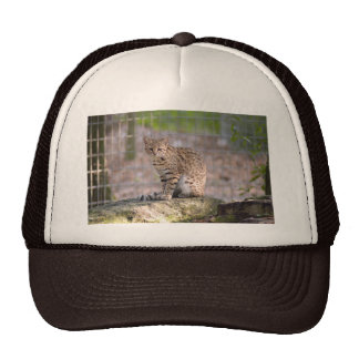 geoffroy-cat-019 trucker hat