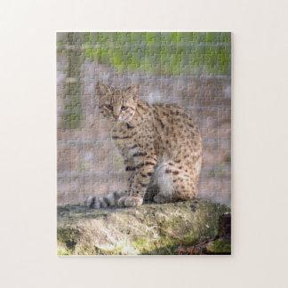 geoffroy-cat-019 puzzle con fotos