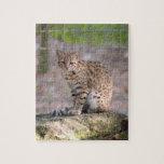 geoffroy-cat-019 rompecabezas con fotos
