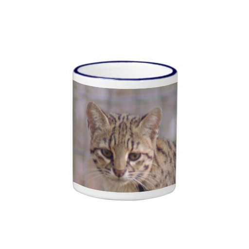 geoffroy-cat-019 taza