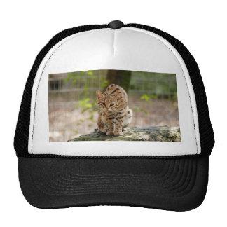 geoffroy-cat-020 hats