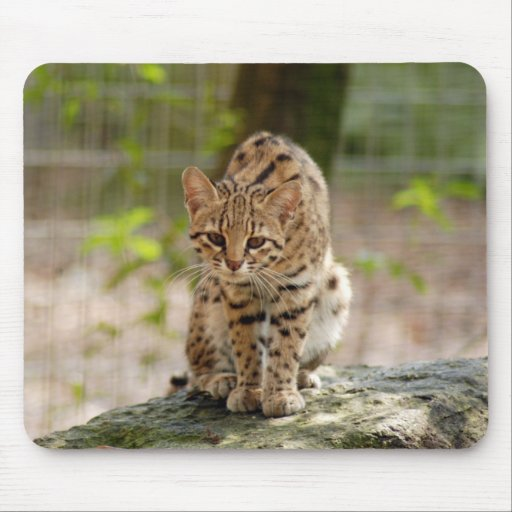 geoffroy-cat-020 mouse pad