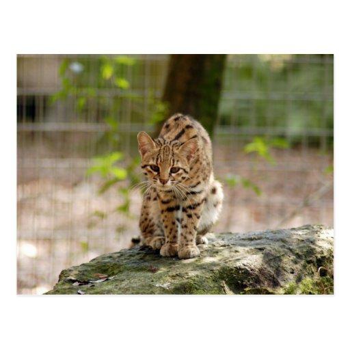 geoffroy-cat-020 postales